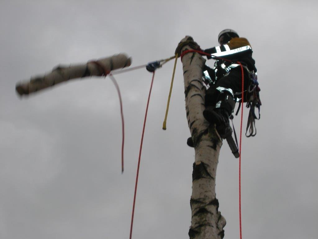 Baumpflege-3