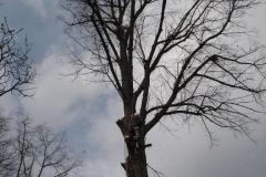 Baumpflege-1